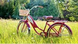 Велосипед в жизни современного человека.